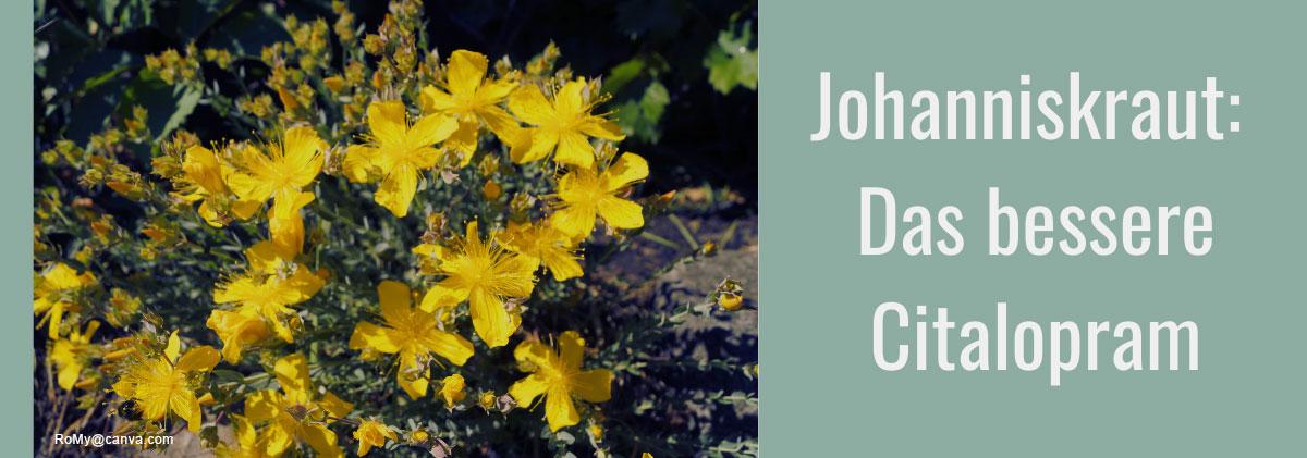 Johanniskraut - Das bessere Citalopram?